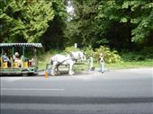 horse drawn carriages around stanley park: by sweeney, Views[224]