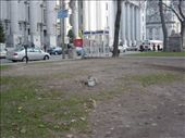 Squirrels in the city: by sweeney, Views[233]