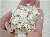 The Shells that make up the beach at Shell Beach Sept 08: by swhateley, Views[156]