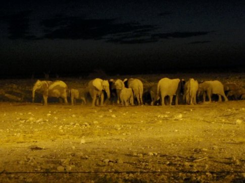 Elephants at the flood lit watering hole