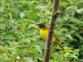 Bird to a rainbow: ''I..I ...I haven't seen any yellow'': by tadeja, Views[145]