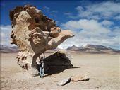 Tree rock in Uyuni National Park: by tahiraf, Views[387]