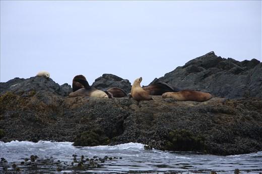 Seals off the coast