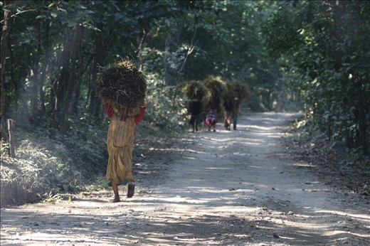Local women collect hatch for their homes from the local forests in the buffer zones surrounding Chitwan National Park