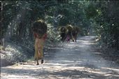Local women collect hatch for their homes from the local forests in the buffer zones surrounding Chitwan National Park: by tamitack, Views[126]