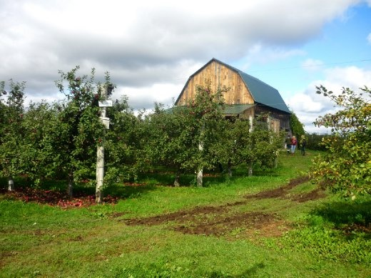 This barn marks the beginning of my adventures at the Petch Orchards in Hemmingford, Quebec. Since it rained for three days up to the day of my visit, the fields were beautifully green and exceptionally mystical. After checking in here, I was able to go wandering through the fields of apples and pumpkins.