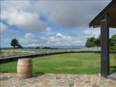 Vineyards in Nelson: by tara_and_mike, Views[148]