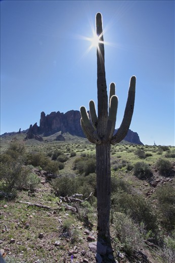 Warm spring day at the Lost Dutchman State park, AZ.