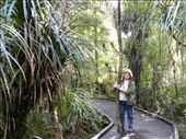 One he'll grow up to be as big as Tane Mahuta!: by taylortreks, Views[92]