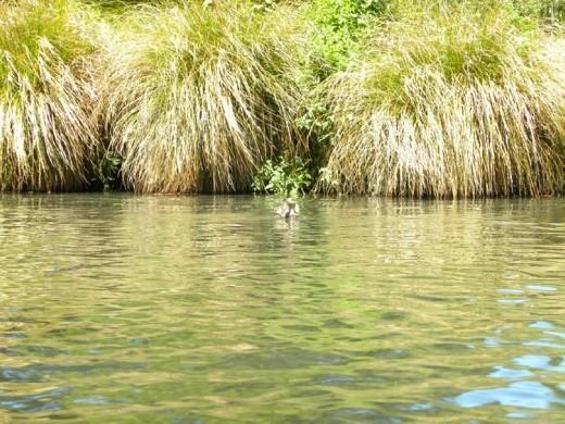 Ducks everywhere!