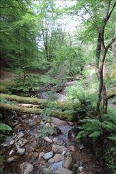 Fallen tress choke the small stream: by taylortreks, Views[43]