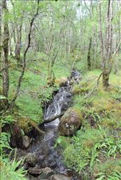 Small-Stream-Babbling-Down-the-Steep-Hillside: by taylortreks, Views[18]