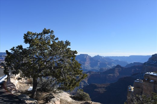 There were interesting trees on the Canyon rim, as well as LOTS of layers to draw your attention.