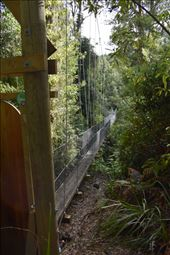 Our canopy tour started with a low swing bridge.: by taylortreks, Views[13]