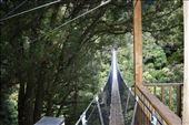 This looooong swing bridge connected two of the longer ziplines.: by taylortreks, Views[15]