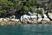 Wind and waves scoured exotic hollows in the seaside rocks on Adele Island.: by taylortreks, Views[58]