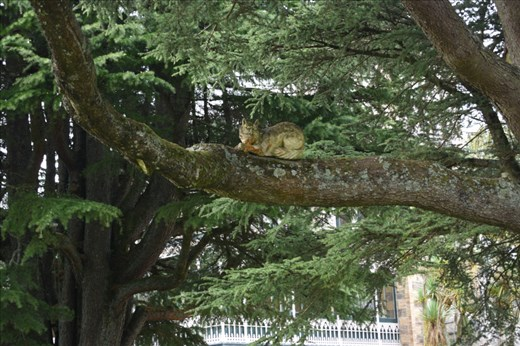 We even found the Chesire Cat that had eluded us on our first visit to the Castle gardens.