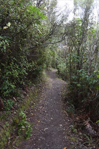 It certainly was a STEEP trail through the forest up to the first lookout on Queen Charlotte Drive.