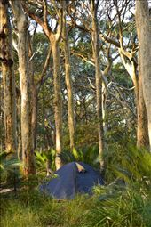 Bush camping by the sea. 
