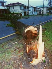 Weeklong storms last day is now.Much damage is caused.How longs a tree been down: by tazau, Views[75]