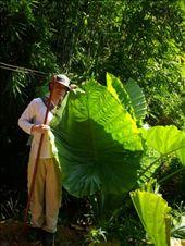 Huge Leaved Plant: by teamgavigan, Views[223]