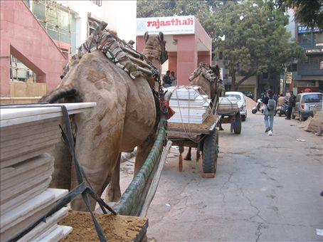 Treno di cammelli che trasportano lastre di marmo per una nuova costruzione (il pelo e' rasato secondo schemi molto geometrici - ma non si vedono)