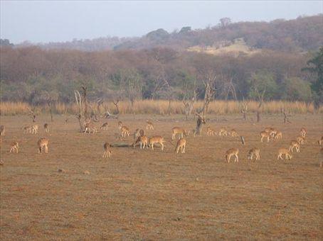 Cervi e altra animaglia nella riserva di Ranthambore