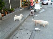 Two of many cute dogs on the streets :(: by teianddave, Views[191]