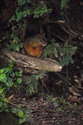un écureuil (ininteressant peut être, je l'ai en 10 exemplaires au moins!): by tempolibre, Views[172]