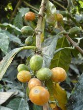 Grains de café: by tempolibre, Views[353]
