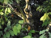 Chaud chaud cacao: by tempolibre, Views[231]
