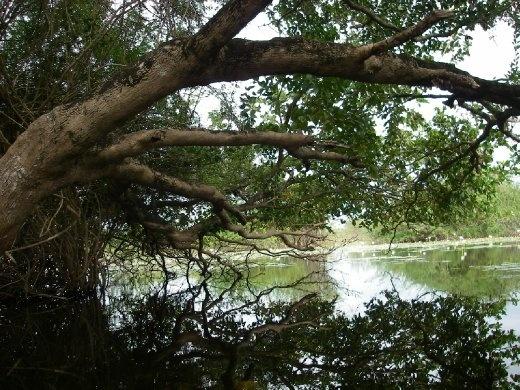 lagoon in crooked tree