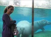 Me and a Hippos behind: by terrid_b, Views[131]