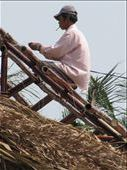 Smoking while constructing a thatch roof - health and safety???: by terrihorner, Views[120]