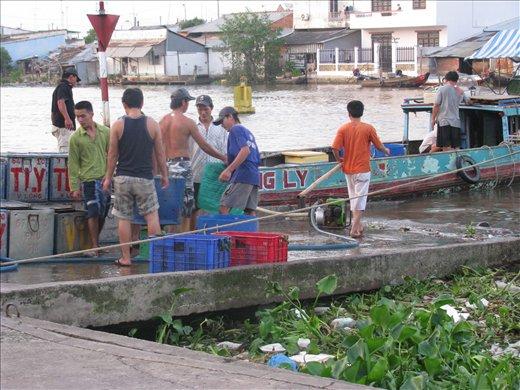 Vinh Long- fisherman coming in