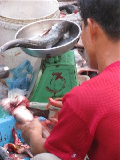 Making a fishy sale - Vinh Long. The photo which caused Ash to become Vegetarian (for 3 days!)