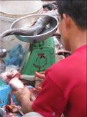 Making a fishy sale - Vinh Long. The photo which caused Ash to become Vegetarian (for 3 days!): by terrihorner, Views[226]