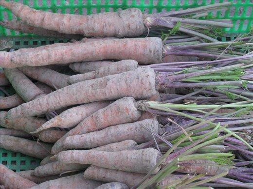 Dirty carrots! Vinh Long