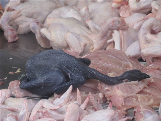 1st time seeing a black skin chook at wet Market - used medicinally