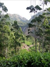 Munnar scenery : by tessa86, Views[276]