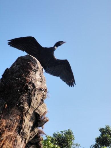 Some bird...