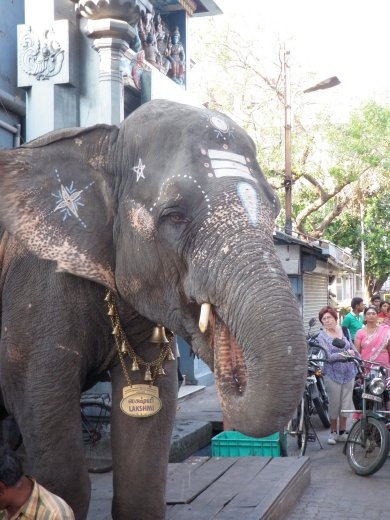 This elephant was supposed to bless people who gave him coins, but it just whacked them on the head with its trunk! Maybe they didn't pay him enough?