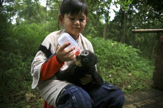 Beside school time, Khiem Nguyen Nadler (9 years old, Mr. Nadler's first son) is helping miss Elke Schwiers, the animal kepper, to feed morning breakfast to little langur Chu Man Ray.