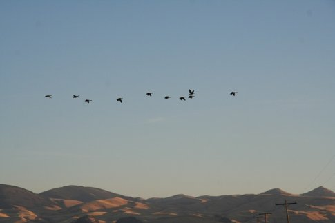 the geese are heading south