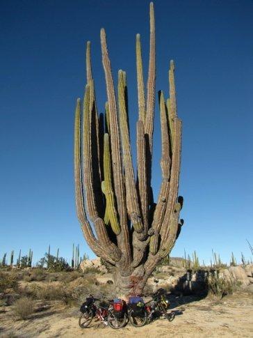 Big cactus (is dat dezelfde richard?)