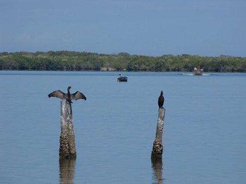 Cormorants near San Cayetano