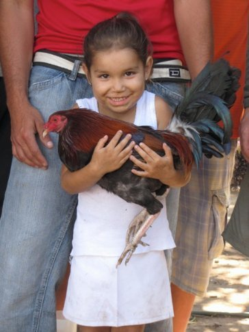 Luis granddaughter holding his favourite rooster, who lies down on command
