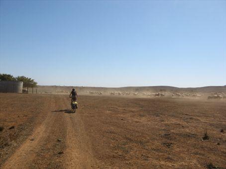anna...herding sheep near Hawker