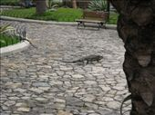Guayaquil has a whole park full of iguanas: by thehappyeggs, Views[241]