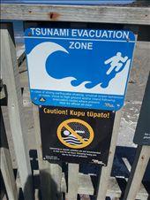 island bay tsunami warnings: by thekiwireporter, Views[131]